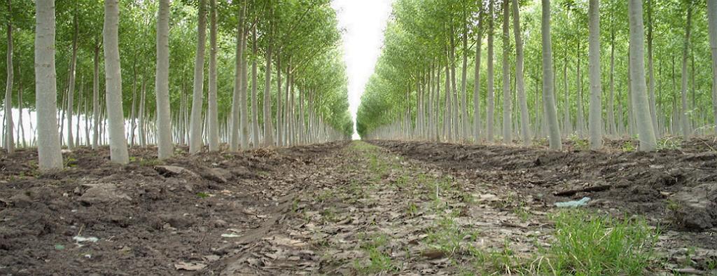 Según la FAO, se pierden siete millones de hectáreas de bosque cada año